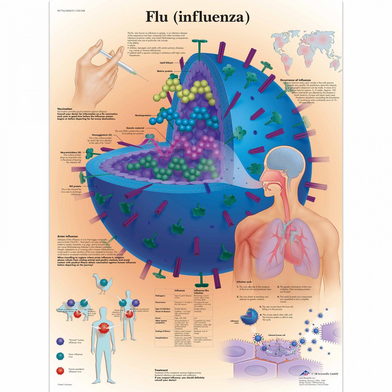 Pancarte murale plastifiée Flu (Influenza) - 50 x 67 cm