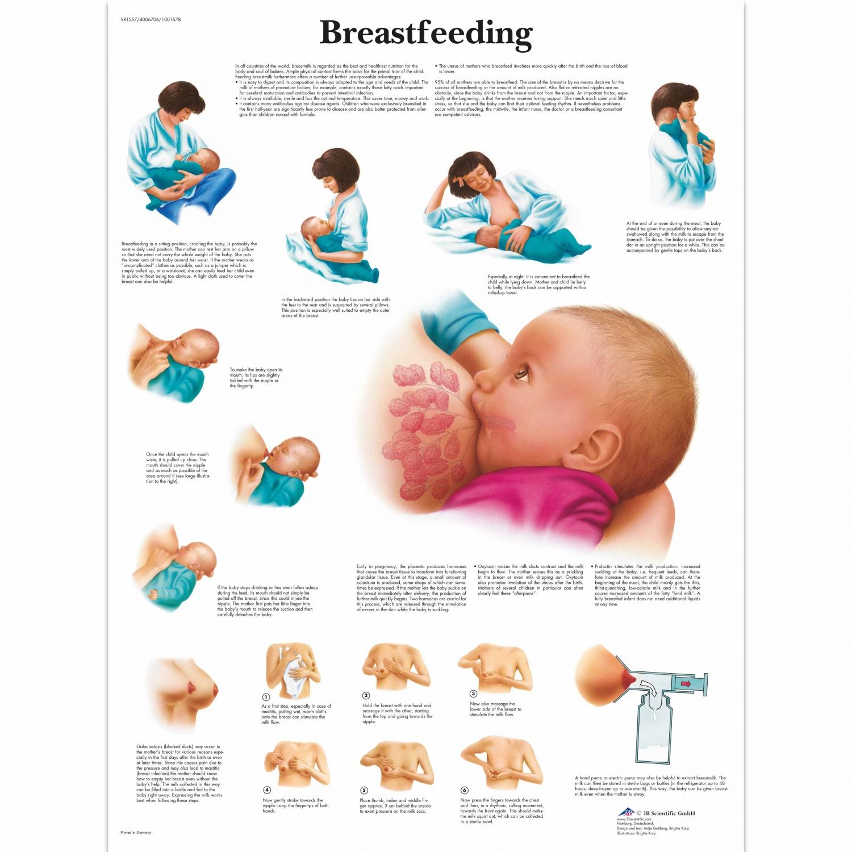 Wandplaat geplastificeerd Breastfeeding - 50 x 67 cm